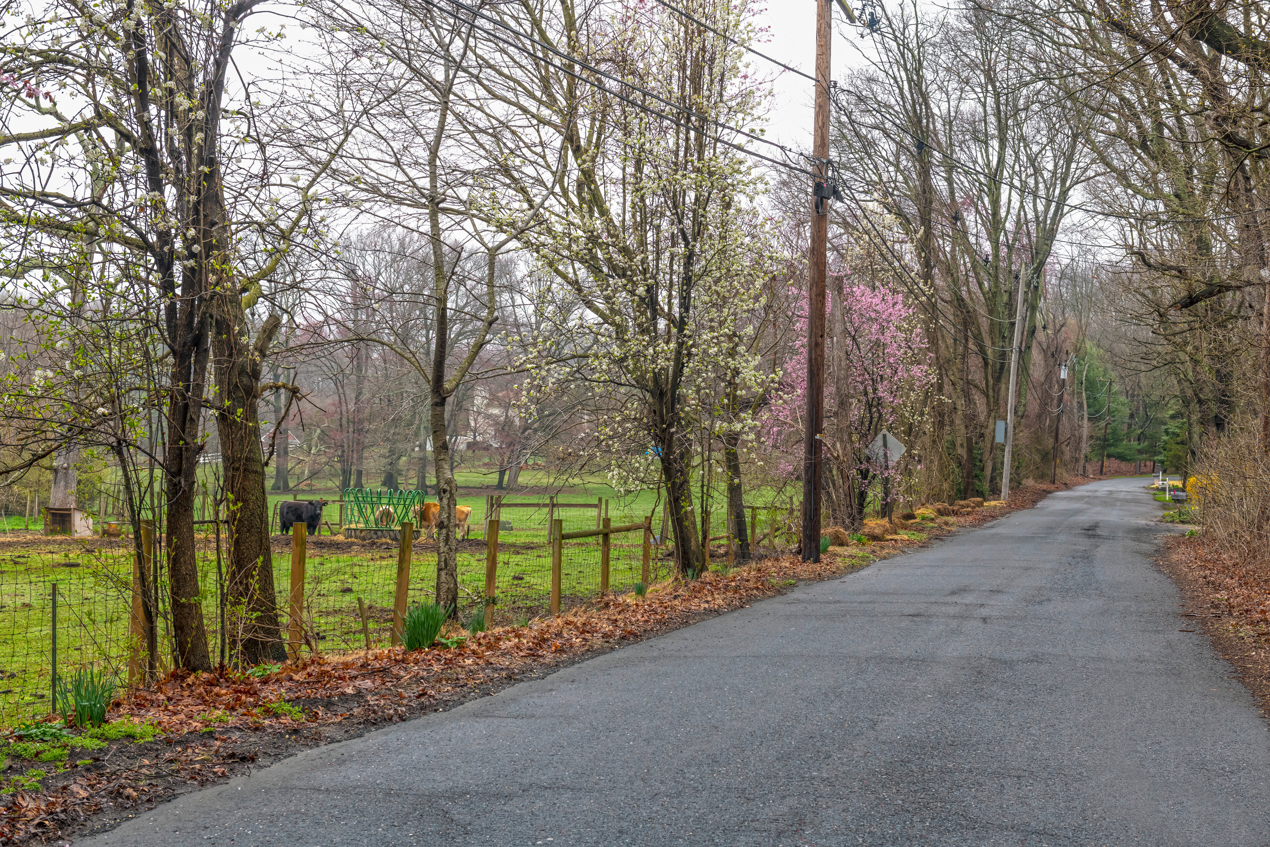A rural country road surrounded by Spring blossoms in Monroe New Jersey